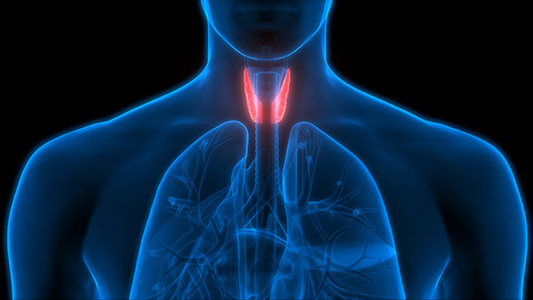 The Thyroid: The Body's Furnace
